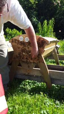 Beekeeper working with his bees without protective gear